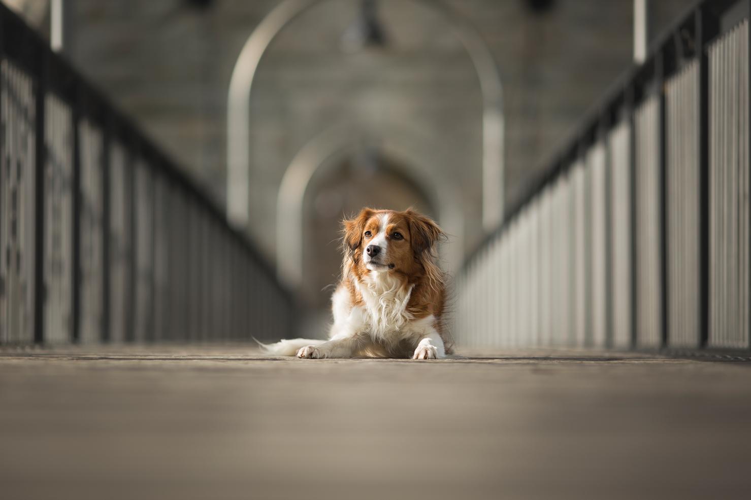 Hundeshooting Brugg