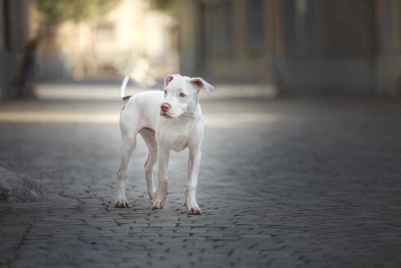 Hundeshooting in Sursee, Hundeshooting Luzern