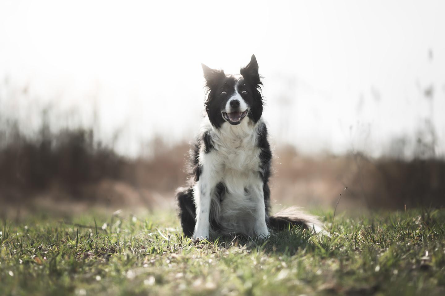 Hundeshooting, Hundefotos, Hundefotografie, Luzern, Tierfotografin Luzern
